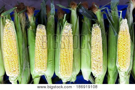 Fresh raw corn on the cob at the village market