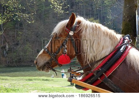 Traditional horse-drawn carriage, Slovakia.