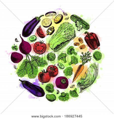Vector circle of vegetables. Watercolor round illustration. Vegan food. Healthy food background. Carrot pepper broccoli eggplant cucumber cabbage beets tomato cauliflower. Vector illustration.