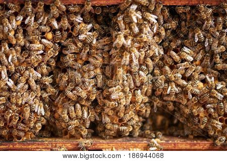 Inside of a hive with a lot of bees