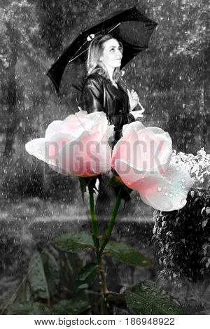 photography is with scene to bloom roses on background rain and going girls