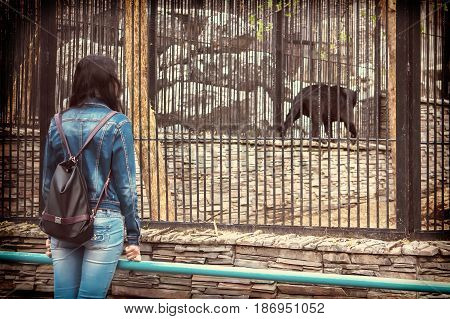 The Girl Walks Through The Zoo And Looking At Animals In Cages