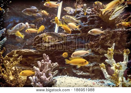 Fish In An Aquarium On A Blue Background