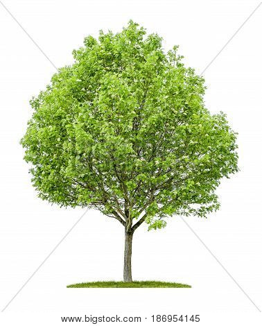 An Isolated Service Tree On A White Background