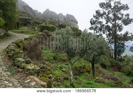 The slope of mountain Monsanto in the fog Portugal