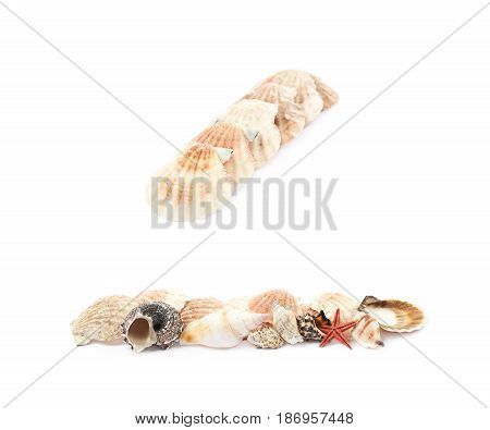 Line of decorational sea shells isolated over the white background, set of two different foreshortenings, set of two different foreshortenings