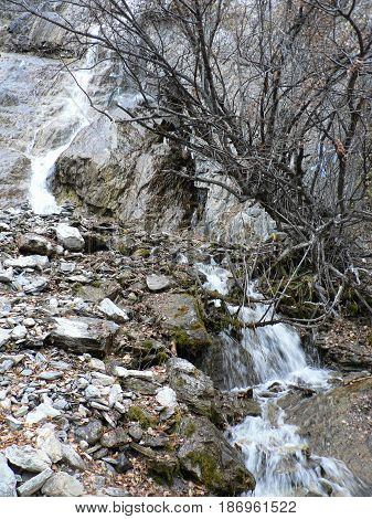 Small waterfall flows down from the cliff. Old naked tree at the bank. Late autumn. Altai Mountains, Russia.