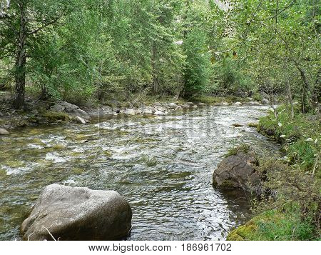 Small river in the mountains. Water flows between rocks and grass, ecology theme. Cold creek running among stones. Forest in the background. Altai Mountains, Russia.