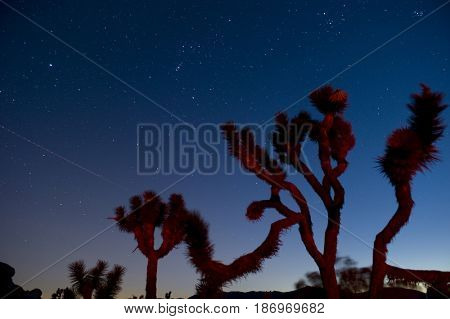 Stars in sky over unusual trees
