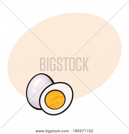 Boiled, peeled chicken egg, whole and cut in half, sketch style vector illustration with space for text. Hand drawn, sketched illustration, whole and half of hard boiled chicken egg
