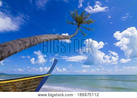 Coconut Palm tree with a ship on the white sandy beach