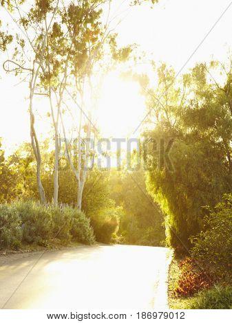 Road and lush foliage