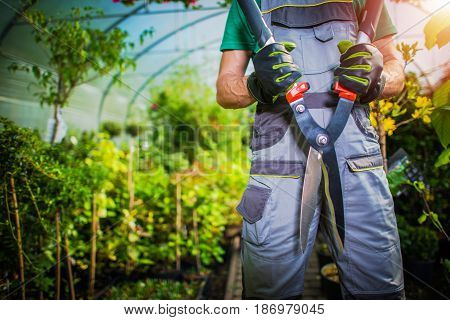 Plants Trimming Time. Professional Gardener with Large Garden Plant Cutting Scissors in a Greenhouse. Spring Time Plants Trimming.