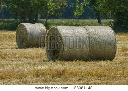bale of hay in the meadow in summer