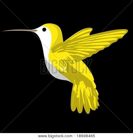 Cute vector humming bird on black background