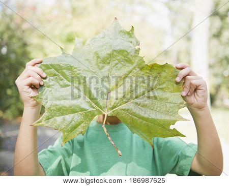 Caucasian boy holding large leaf