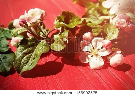 Tree twigs with blooming flowers on wooden background
