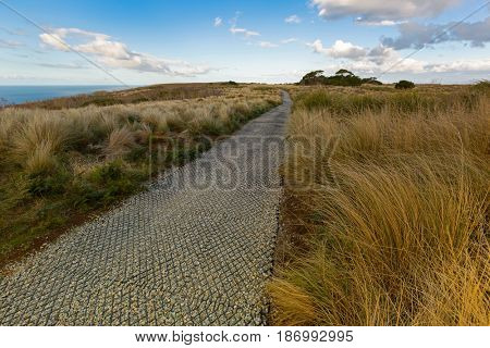 Grass along smooth path on top of The Nut State Reserve Plateau tableland in Stanley, Autumn in Tasmania, Australia. It is old volcanic plug of basalt with height of 143m. rising from Bass sea Strait
