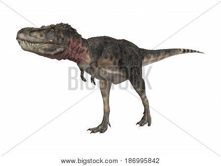 3D Rendering Dinosaur Tarbosaurus On White