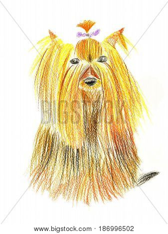 Little dog (red and yellow yorkshire terrier) with small purple bow on white background. Hand drawn. Children's pencil drawing simulation.