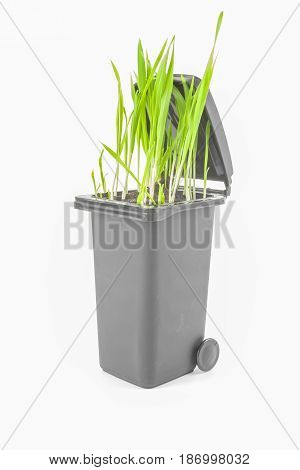 Grey plastic trash recycling container ecology, green wheat, isolated