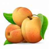 Heap of fresh apricots fruit close up. Few raw apricots with leaf isolated on white background. Best vector illustration about fruits agriculture cooking food gastronomy etc poster