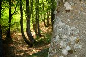 texture bark and grove of Nebrodi Park, Sicily poster