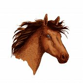 Horse or wild racehorse stallion head. Arabian brown mustang trotter or racer. Vector sketch symbol for equine sport races or rides, for equestrian racing contest or exhibition poster