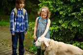 Little schoolchildren met on the way to school a large dog. The good-natured retriever drew the children's attention. The girl fearlessly strokes the big dog. poster