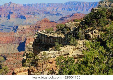 Grand Canyon Vegetation
