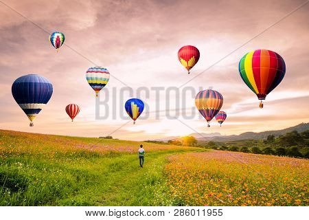 Silhouetted Of Asian Man Standing On Cosmos Flowers With Hot-air Balloons Flying Over The  Sunset.