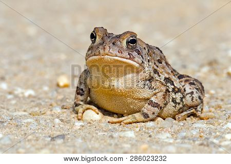 A Toad Sitting On A Dirt Road