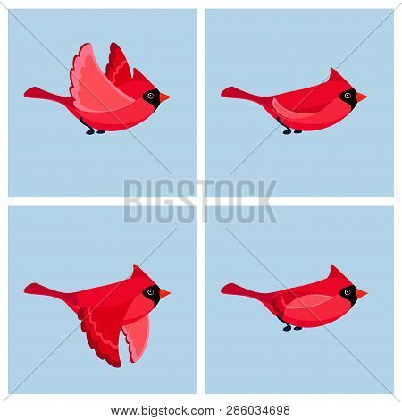 Vector Illustration Of Cartoon Flying Cardinal Bird (male) Sprite Sheet. Can Be Used For Gif Animati