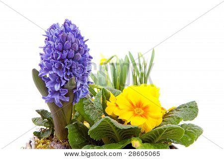 Spring Flowers In Closeup