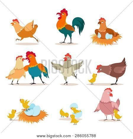 Cartoon Chicken. Chick With Eggs, Hen And Rooster. Happy Christmas Chicken, Domestic Birds And Valen