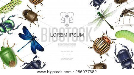 Realistic Insects Concept With Dragonflies Scarab Colorado Potato Beetle Stink Bugs Mosquito Caterpi