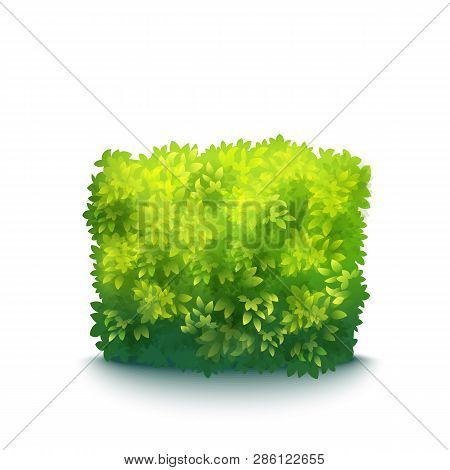 Vector Realistic Fresh Green Garden Hedge Isolated On White