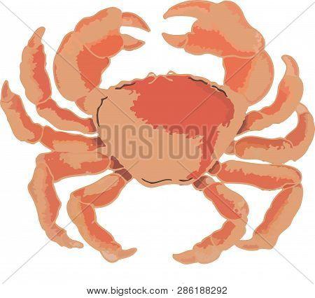 Large Red Crustacean Atlantic Crab Large Red Crustacean Atlantic Crab