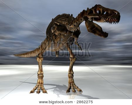 Trex Dinosaur Skeleton