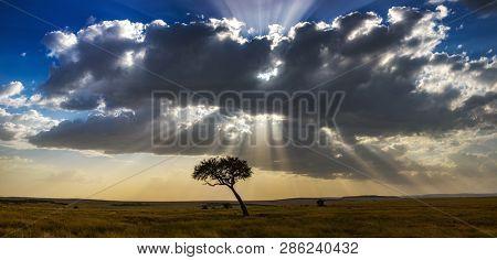 Panaorama of a lone acacia tree and sunset over the grasslands of the Masai Mara, Kenya.
