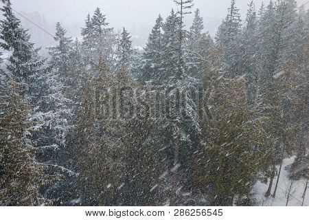 Winter Snow Storm At Vancouver Bc Canada