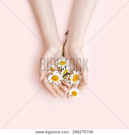 Fashion Hand Art Chamomile Natural Cosmetics Women, White Beautiful Chamomile Flowers Hand With Brig