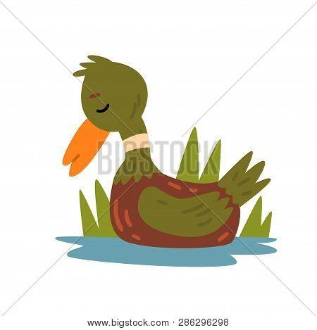 Cute Funny Male Mallard Duckling Cartoon Character Swimming In Lake And Sleeping Vector Illustration