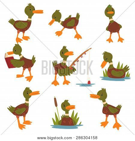 Cute Male Mallard Duck Set, Cute Funny Duckling Cartoon Character In Different Situations Vector Ill