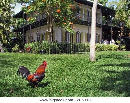 Rooster At Hemingway House