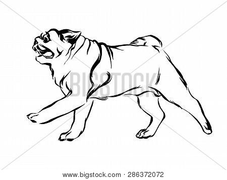 Dog Running Isolated Images Illustrations Vectors Free