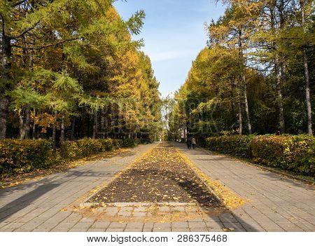 Promenade Alley In Arboretum In Zelenograd In Moscow, Russia