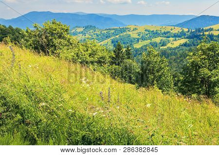 Mountainous Countryside On A Hot Summer Afternoon. Grassy Slope With Wild Herbs And Trees. Meadows O
