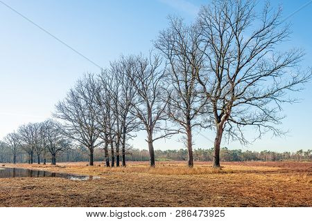 Trees With Bare Branches At The Edge Of A Mere In The Dutch Nature Reserve Galderse Heide Near The C