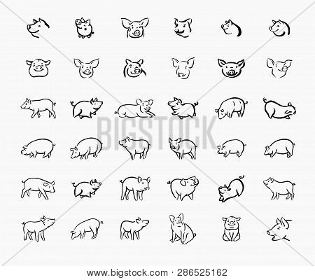 Pig Sketch Icon Set For Web, Mobile And Infographics. Hand Drawn Pig Icon. Pig Vector Icon. Pig Icon